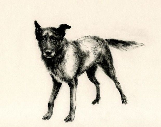 from Vecchi Cani (Old Dogs) by Giovanna Duri