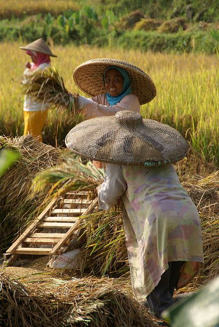 Working in Rice Fields - West Java, Indonesia