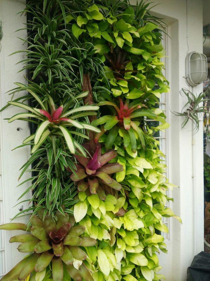 Vertical Garden Bromeliads Indoor Amp Outdoors Care And