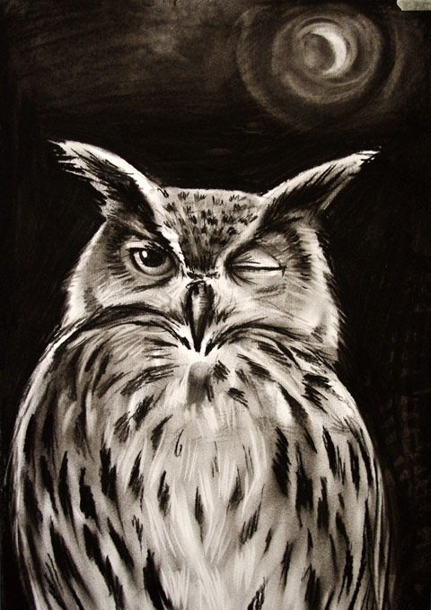 charcoal owl drawing easy - Google Search