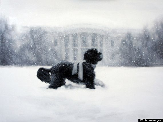 A painting of the Obama family dog Bo running through the snow