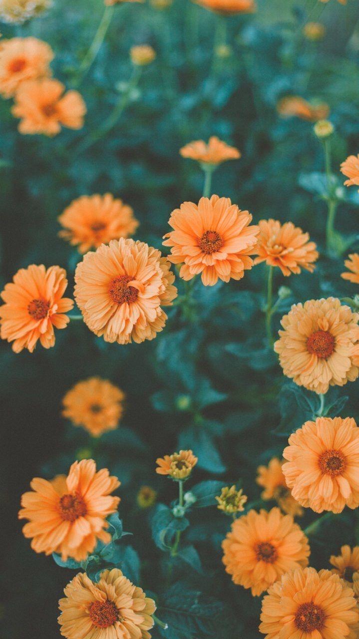 Wallpaper Flowers Orange Green Photography Flower
