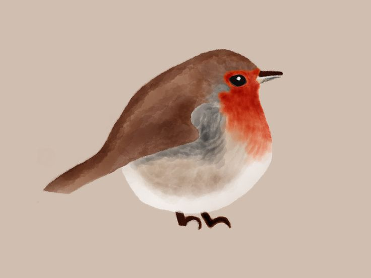 Robin. By Kate England.