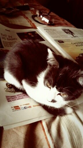 How can I read about how Robin Campbell ruined UB40 when Hank The Plank sits right on the paper. #fml #lovemykitten