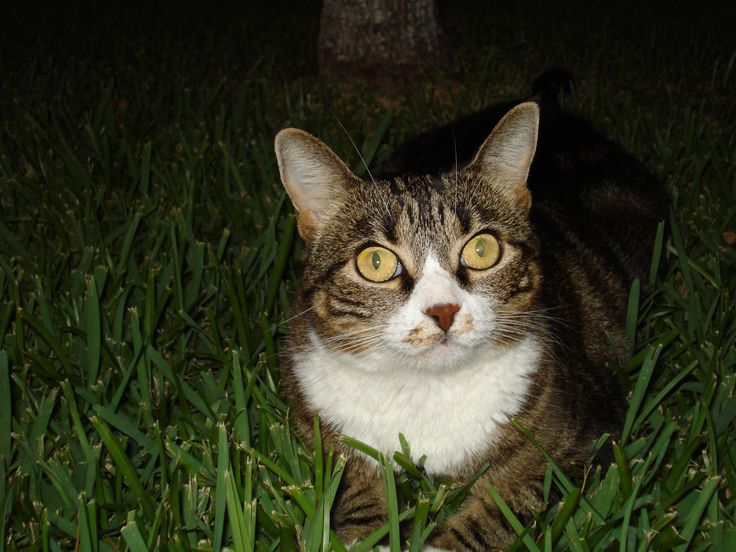 Juliet (my own cat!)  Princessa!