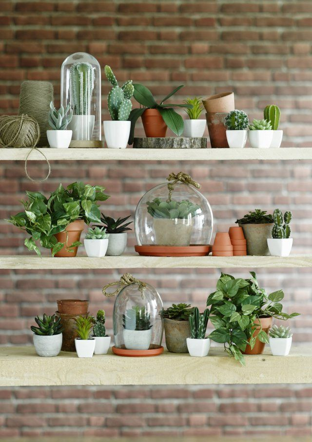 8 tendances d co adopter cet t diy cactus et pots for Plante interieur deco