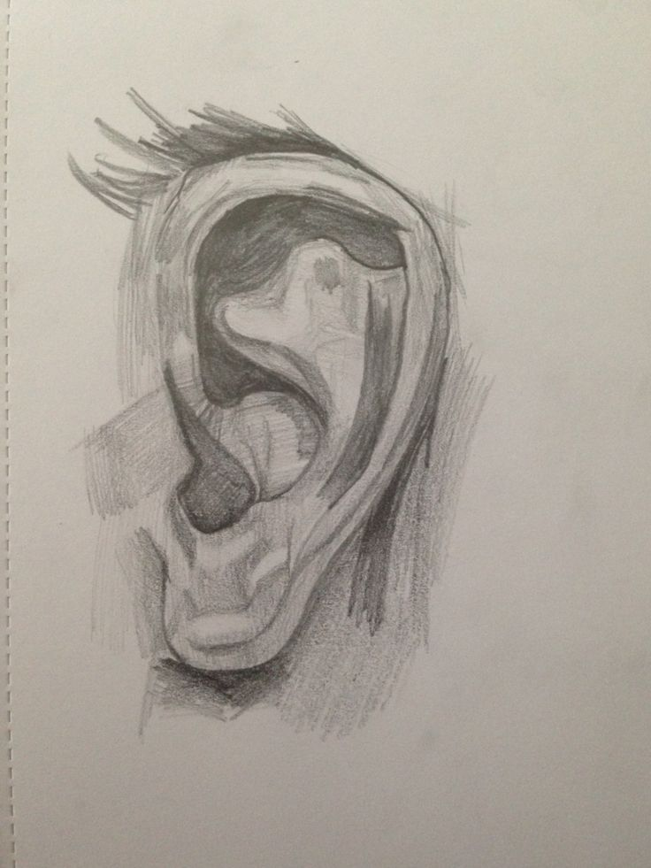 Quick sketch of an ear