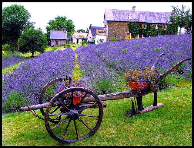 Campo de lavanda – Provence France