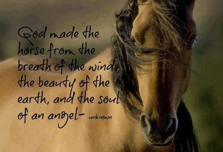 Horses. Quotes. WildflowerCowgirl.com