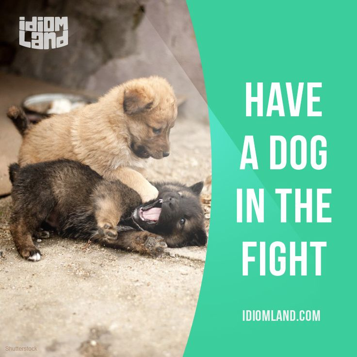 """English idiom that means """"to have an interest in the outcome of a situation"""". Example: """"To be that strongly opposed to change, you must have a dog in the fight."""" One of a series of """"Idiom Cards"""" created by IdiomLand.com"""
