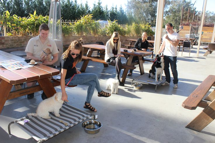Customers enjoying our new pet friendly area @ The Australian Hotel and Brewery