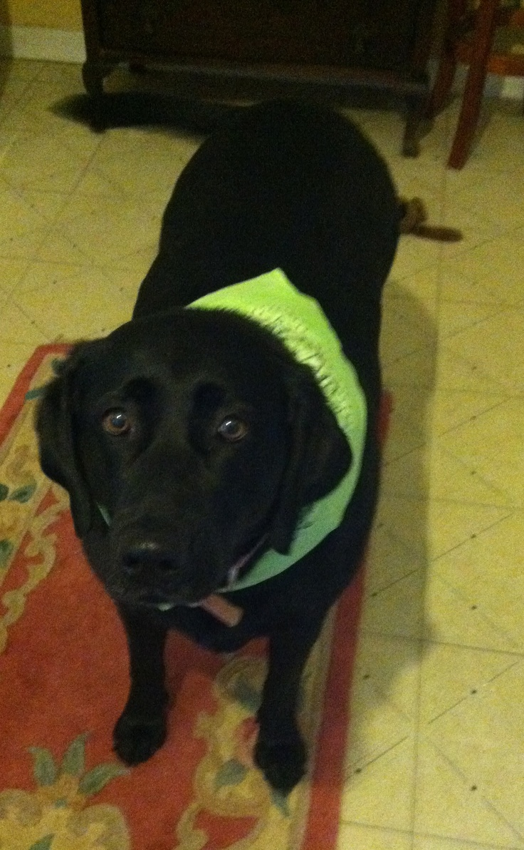 Maggie Mae and her lime green bandana (With images