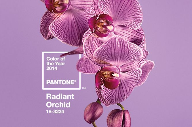 Love Radiant Orchid