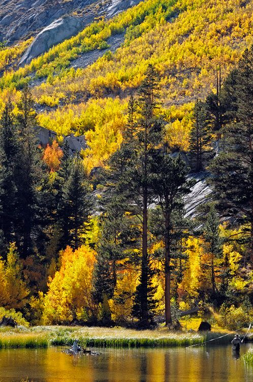 34 best reasons we love fall camping images on pinterest for Best trout fishing near me