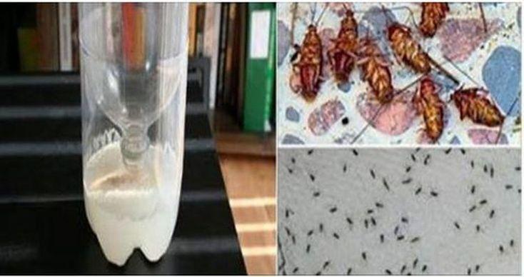 Cada vez que llueve, sube la temperatura o hay mucha humedad sabemos que tendremos que luchar contra la proliferación de moscas y mosquitos. Estos insectos son parte de nuestra vida cotidiana pero no por esto dejan de ser molestos y nunca nos acostumbramos a que invadan nuestras casas poniendo en riesgo la salud de nuestras ...