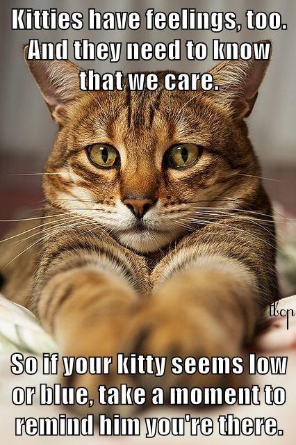 https://s-media-cache-ak0.pinimg.com/736x/1a/3b/b6/1a3bb68f6f887bb215803cadc9461c17--cute-cats-adorable-animals.jpg