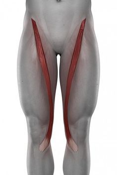 hip problems, movement dysfunction, glute activation, hip injury, hip joint- my life's dilemma