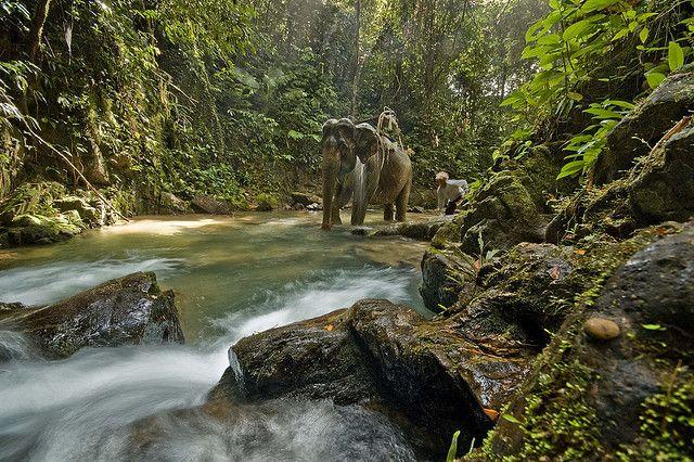 Elephant trekking Khao Sok National Park, Thailand