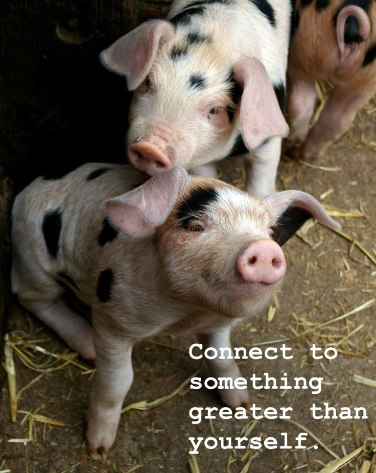 Connect to something greater than yourself. —Unknown