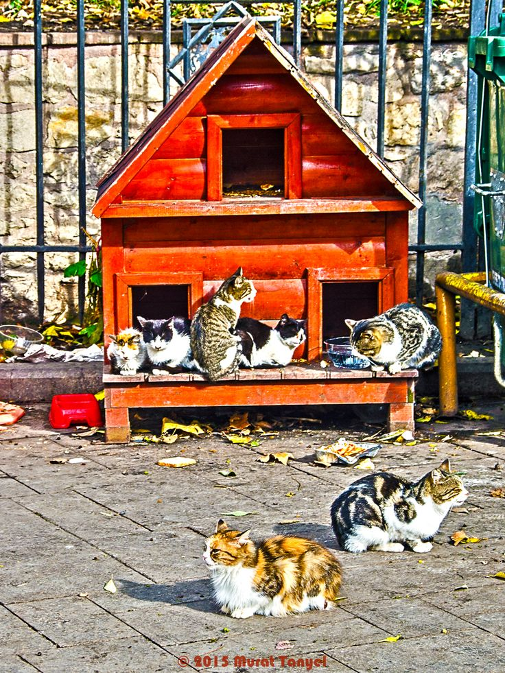 Istanbul Residents - Gulhane, Istanbul- Cats are everywhere in Istanbul, and very comfortable. We saw this little house at the entrance to Gülhane Park. We could not figure out whether it started as a pigeon house and was taken over by cats, but now it is a cat house. The population of Turkey is mostly Muslim. There is Islamic lore that encourages tolerance of cats. One popular story is about a cat which thwarted a poisonous snake that had approached the Prophet Muhammad. In another one…