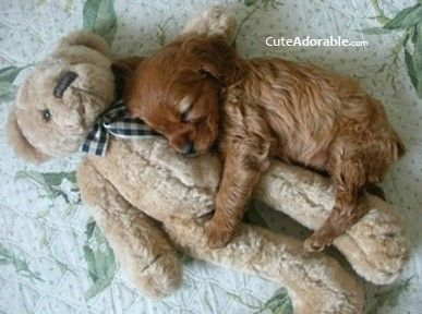 My heart just melted.Aw........;.) Found on pinterest!