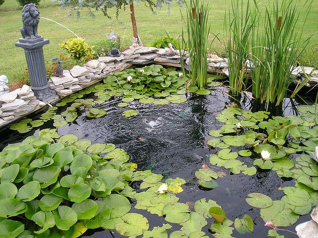 17 best images about koi fish pond dreams on pinterest for Koi pond india
