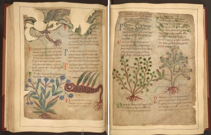 1,000-Year-Old Illustrated Manuscript of Herbal Remedies Available Online