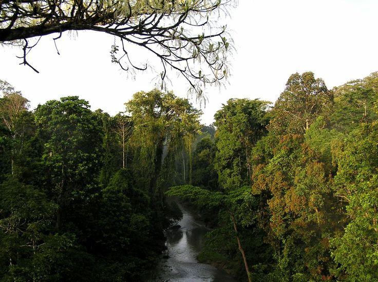 Tropisch klimaat (A-klimaat):  In het noorden van Zuid-Amerika komt een tropisch klimaat voor, dit klimaat wordt voornamelijk veroorzaakt door de breedteligging van Zuid-Amerika (23 graden noorderbreedte tot 23 graden zuiderbreedte).  Door de hoge temperatuur en veel neerslag behoren deze gebieden tot een tropisch klimaat.