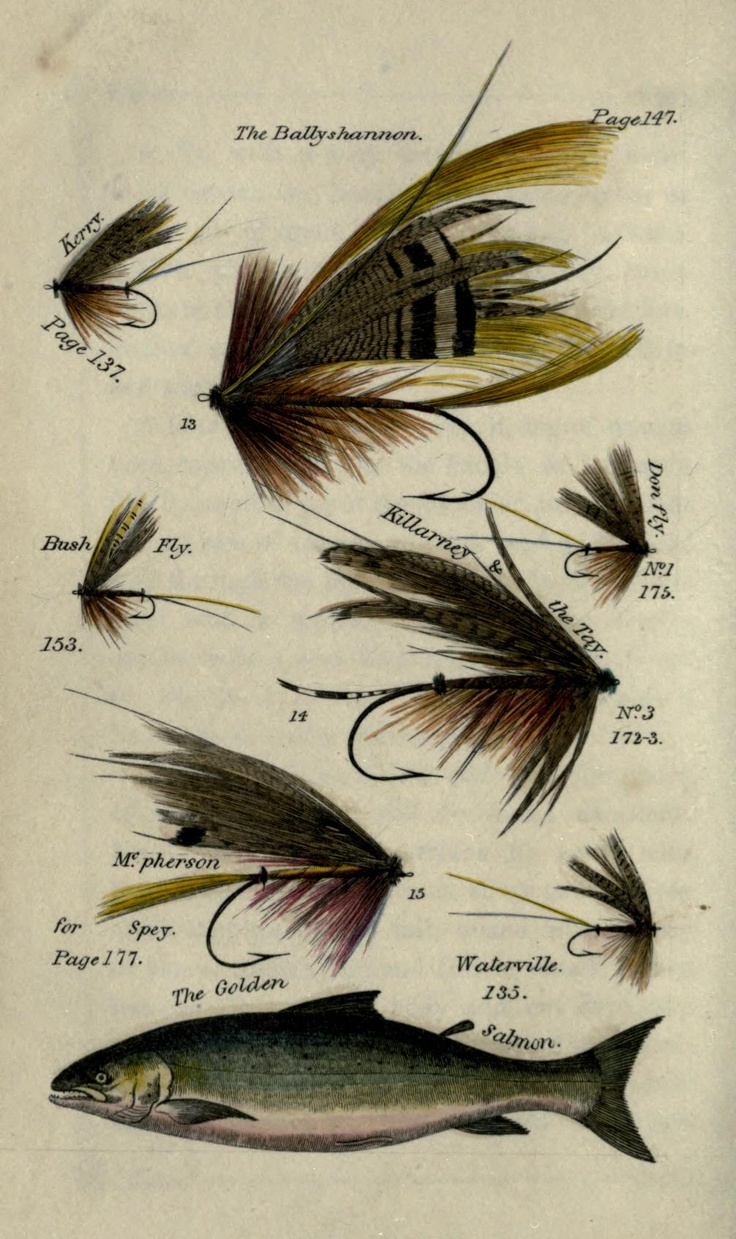 28 best images about fly plates on pinterest trout for Fly fishing art