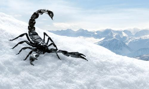 black (=difficulte) pistes are called Black Scorpions ...true! very difficult pistes!!