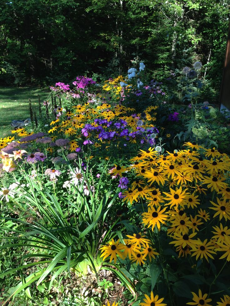Best 25+ Daylily garden ideas on Pinterest | Growing ...