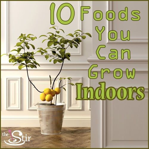 10 Foods You Can Grow in Your House All Through the Year | We love this idea for growing mushrooms indoors!