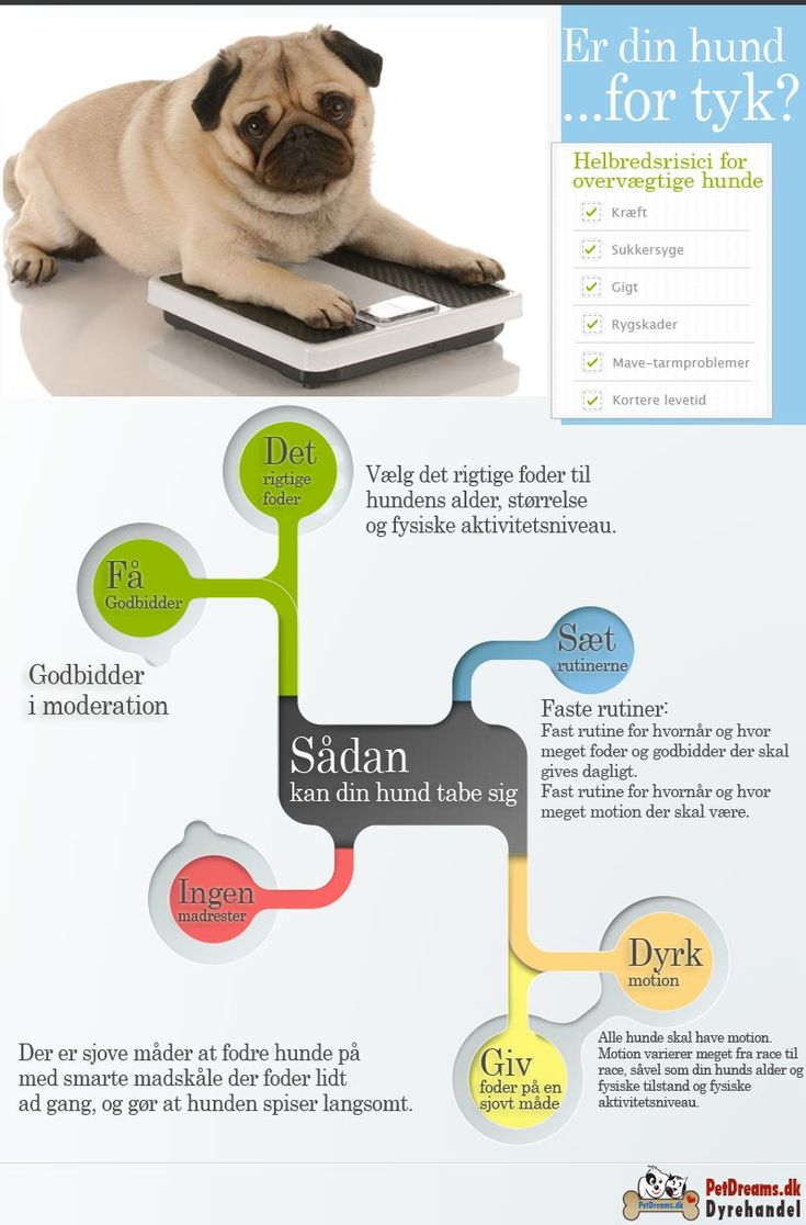 Er din hund for tyk? 40% af alle hunde i Danmark er overvægtige - www.petdreams.dk #hunde #foder #godbidder