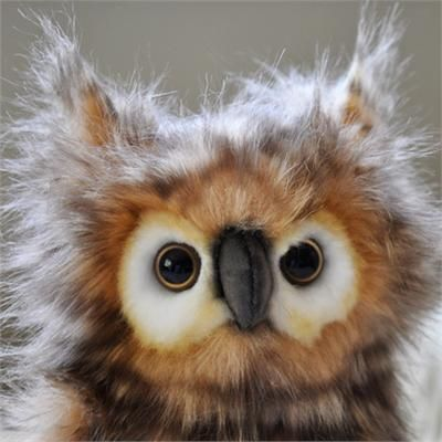 Owl: Little Owl, Baby Owl, Bad Hair, Great Horns Owl, Cute Owl, Feathers, Birds, Stuffed Animal, Real Owl