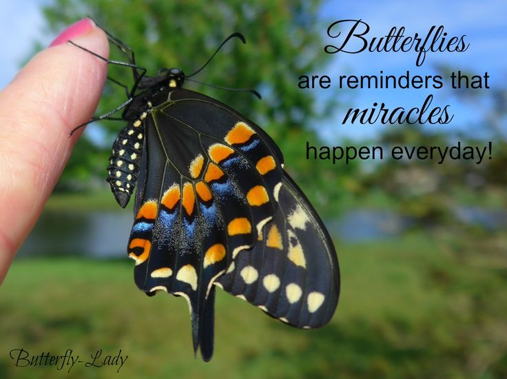 137 Best Images About Butterfly Inspiration On Pinterest