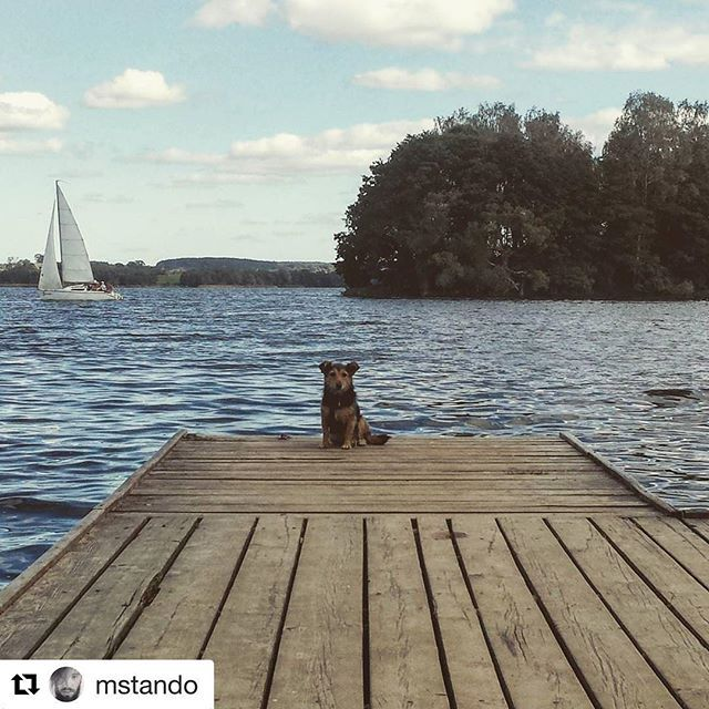 #Repost @mstando with @repostapp ・・・ #frotka #niekupujadoptuj #dog #lake #biskupiec #bischofsburg #ibiskupiec #biskupiecfb #dadaj