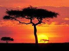 This Tree Looks Like The Lion King Tree More Sunset Pictures African Sunset Beautiful Sunset