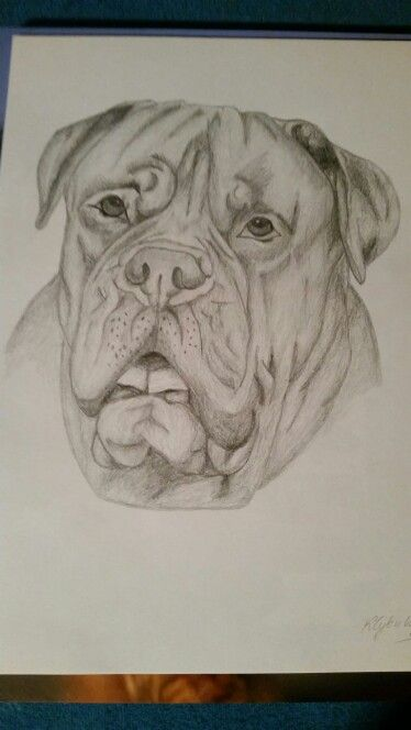 Dog de Bordeaux art