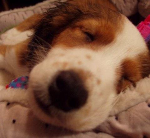 Sleeping Daisy!