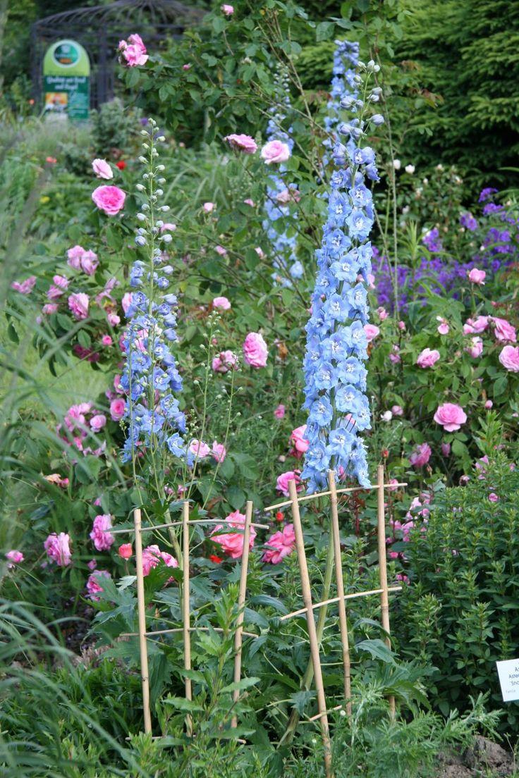 Rosen düngen, Hecken schneiden, Stauden pflegen und teilen: Im Ziergarten ist im Juni einiges zu tun. In unseren Gartentipps zeigen wir Ihnen die wichtigsten Arbeiten auf einen Blick.