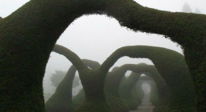 変な形の木のトンネルが世界中で話題沸騰! | RETRIP[リトリップ]