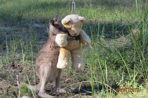 Marsupial órfão abraçado a ursinho de pelúcia comove a internet | RedeTV! Em rede com você.