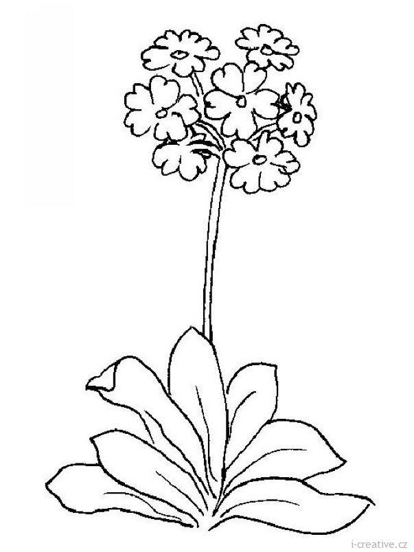 Obrázky jarních květin k vytisknutí - krokusy, narcisy, sněženky, bledule, kosatce, pampelišky, tulipány, petrklíče, konvalinky a hyacinty.        …
