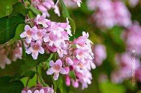 Viráglonc