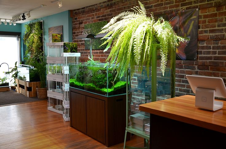 25 best ideas about aquarium store on pinterest coral for Fishing store seattle