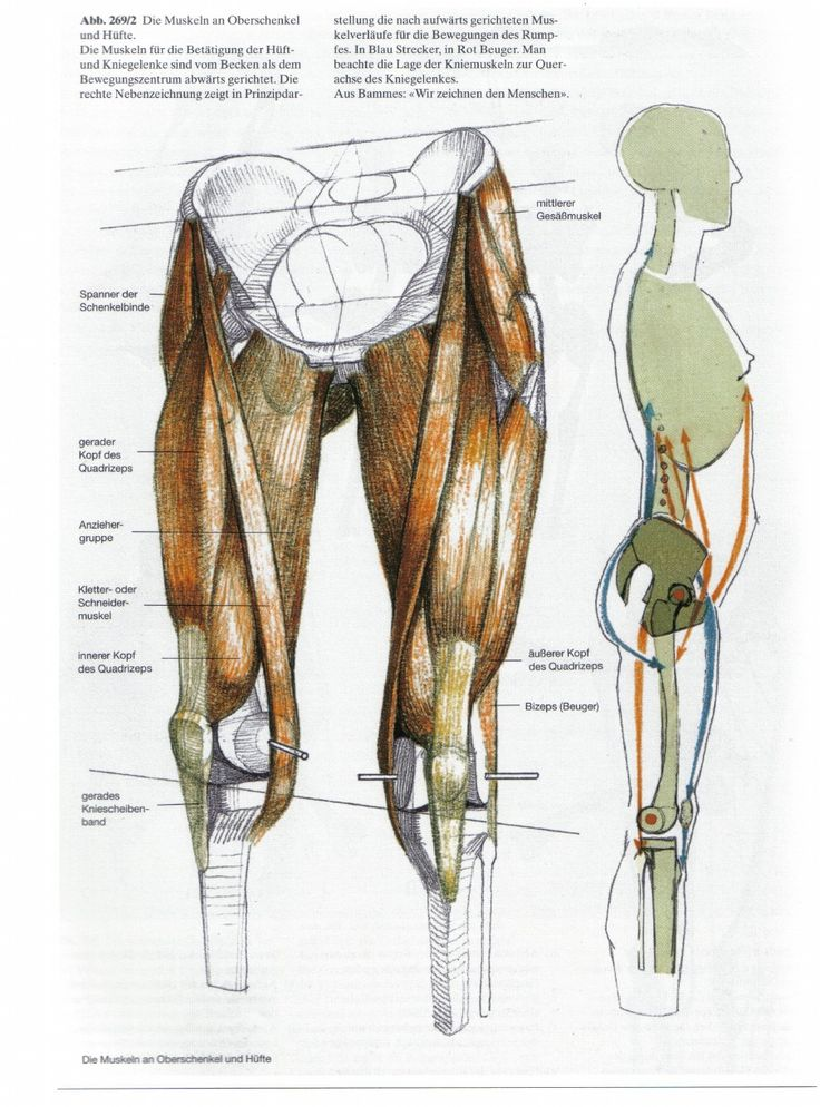 100 best A-2.5 - LEG ANATOMY images by altamir moreira on Pinterest ...