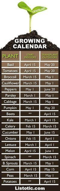 When to plant your vegetable garden.... When to plant what? (when to start seeds indoors and when to transplant them outdoors). Time to get started!