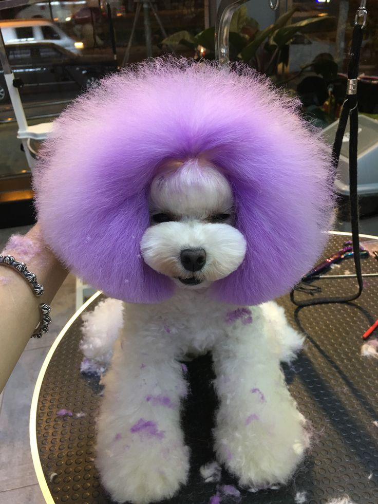 OPAWZ Pet Hair Chalk--Purple. When you can create your own by using OPAWZ Pet Hair Chalk, you will give up to buy pet costumes!!! This is a colored hair chalk that looks so natural on your pets, you will be amazed how it transforms them. Everyone will want to use this pet-safe fur color for any holiday or occasion, not just Halloween, and it's so much fun!!!