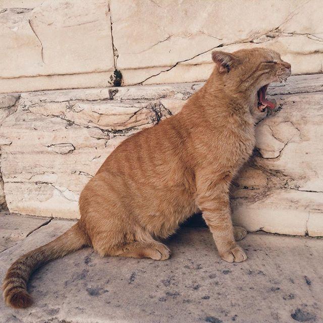【sashok_pirozhok】さんのInstagramをピンしています。 《#✈️ #Athens #Greece #Vacation #Recreation #Journey #Joy #Mood #Island #Sea #아테네 #그리스 #휴가 #휴식 #여행 #기쁨 #행복 #기분 #바다 #Афины #Греция #Отпуск #Отдых #Путешествие #Море #雅典 #希腊 #度假 #度假 #海 #cats》
