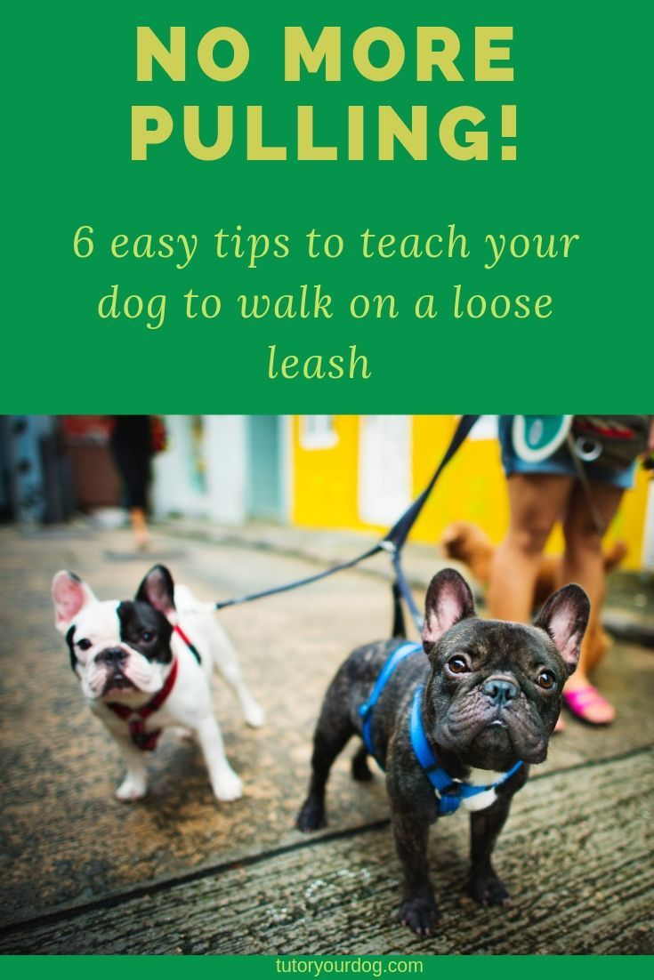 6 Tips To Teach Your Dog To Walk On A Loose Leash Dog Training